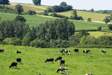grass growth ensures a consistent supply of highly digestible grazing