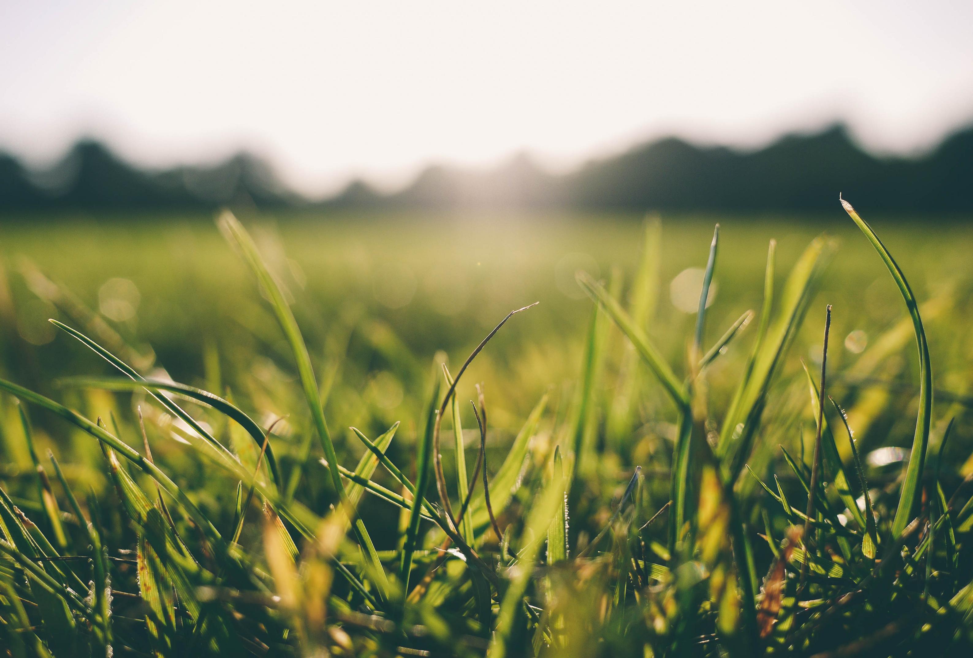 How to utilise forage to drive profits